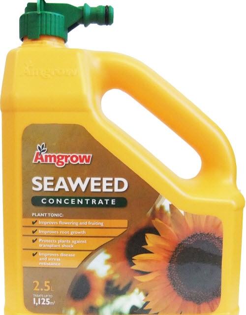 2L Seaweed HO