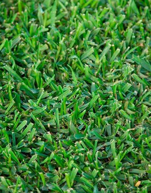 Turf and Grasses