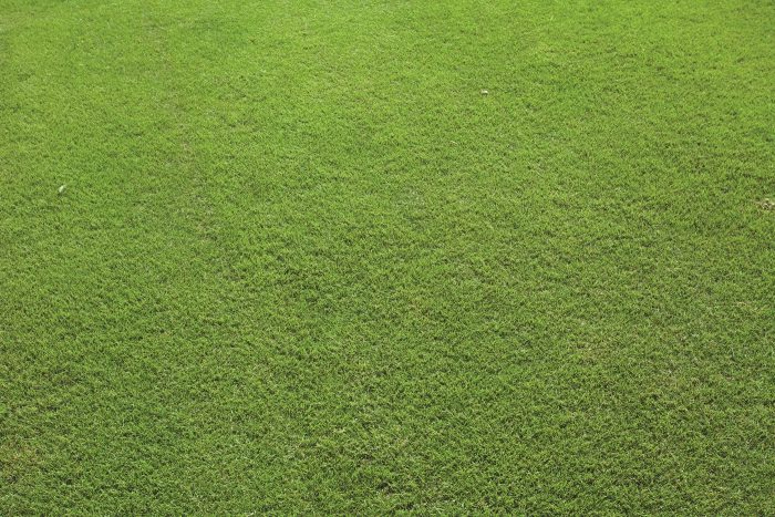 Sir Grange Zoysia DNA Certified Turf by Lawn Solutions Australia