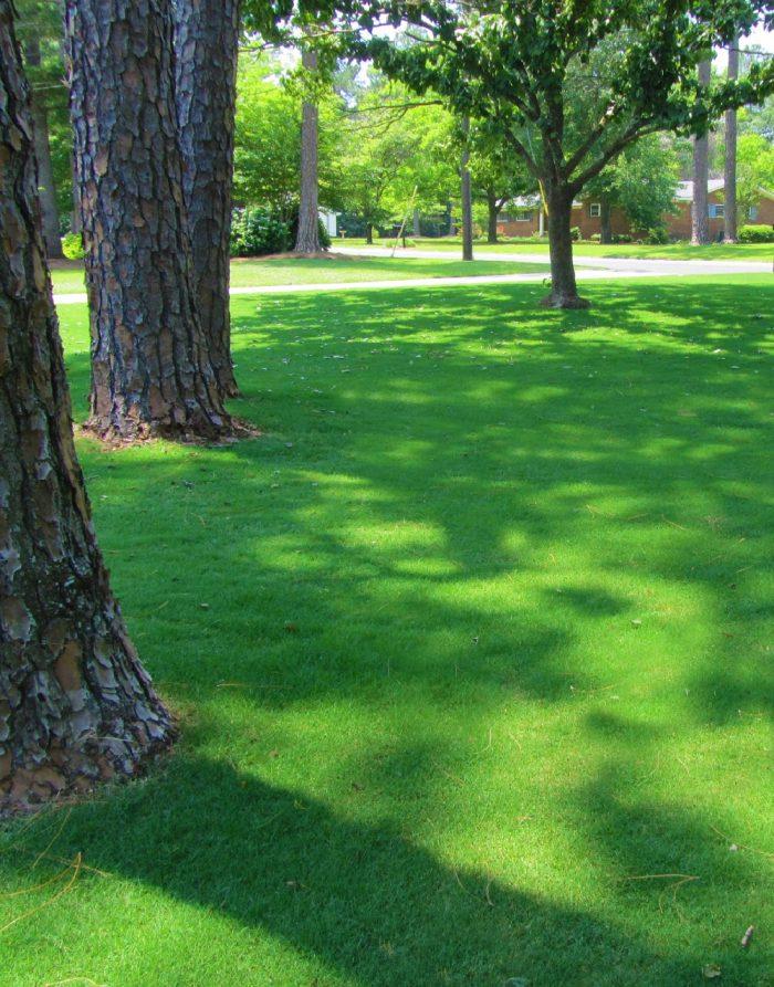 Tif Tuf Bermuda DNA Certified Turf by Lawn Solutions Australia